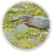 Green Heron On The Hunt Round Beach Towel