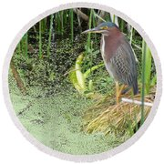 Round Beach Towel featuring the pyrography Green Heron by Ron Davidson