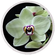 Green Hybrid Phalaenopsis Flower With A Red Wine Center Round Beach Towel by William Tanneberger