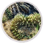 Green Sea Anemone Round Beach Towel