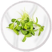 Green Sunflower Sprouts Round Beach Towel