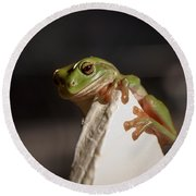 Green Tree Frog Keeping An Eye On You Round Beach Towel