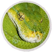 Round Beach Towel featuring the photograph Green Tree Python #2 by Judy Whitton