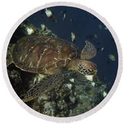 Round Beach Towel featuring the photograph Hawksbill Turtle by Sergey Lukashin