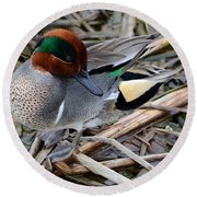 Round Beach Towel featuring the photograph Green-winged Teal by Debra Martz