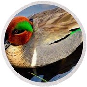 Green Winged Teal  Duck  Round Beach Towel by Susan Garren