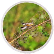 Gregarious Grasshoppers Round Beach Towel by Al Powell Photography USA