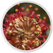 Grevillea Superb Australian Flora Round Beach Towel by Joy Watson