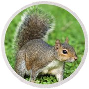 Round Beach Towel featuring the photograph Grey Squirrel by Antonio Scarpi