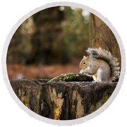 Grey Squirrel On A Stump Round Beach Towel by Spikey Mouse Photography