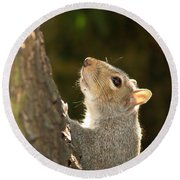 Grey Squirrel Round Beach Towel by Ron Harpham