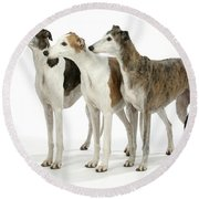 Greyhound Dogs Round Beach Towel