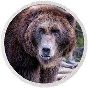 Round Beach Towel featuring the photograph Grizzly by Athena Mckinzie