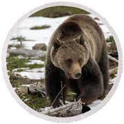 Round Beach Towel featuring the photograph Grizzly Bear In Spring by Jack Bell