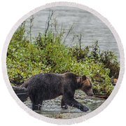 Grizzly Bear Late September 4 Round Beach Towel