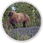 Grizzly Round Beach Towel by David Gleeson