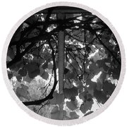 Round Beach Towel featuring the photograph Gropius Vine - Black And White by Joseph Skompski