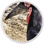 Ground Hornbill Round Beach Towel by Douglas Barnard