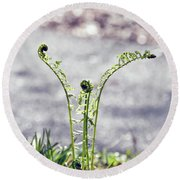 Round Beach Towel featuring the photograph Growing  by Kerri Farley