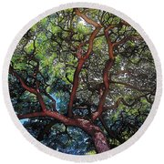 Growth Round Beach Towel by Terry Reynoldson