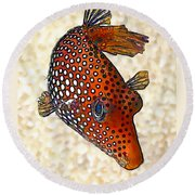 Guinea Fowl Puffer Fish Round Beach Towel by ABeautifulSky Photography