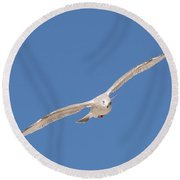 Gull In Flight - 2 Round Beach Towel