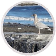 Round Beach Towel featuring the photograph Seagull  by Eunice Miller