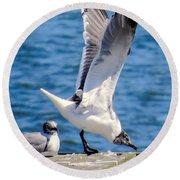 Gulls Of Florida Round Beach Towel