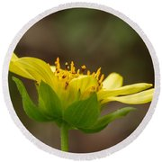 Round Beach Towel featuring the photograph Hairy Leafcup by Paul Rebmann