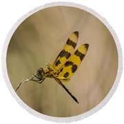 Halloween Pennant Dragonfly Round Beach Towel