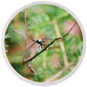 Round Beach Towel featuring the photograph Hangin' Out by David Porteus