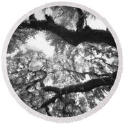 Round Beach Towel featuring the photograph Hanging Moss by Bradley R Youngberg