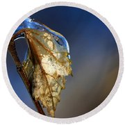 Round Beach Towel featuring the photograph The Last Leaf  by Debbie Oppermann