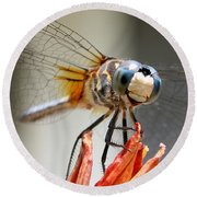 Round Beach Towel featuring the photograph Happy Dragonfly by William Selander