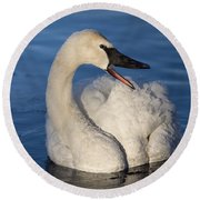 Round Beach Towel featuring the photograph Happy Swan by Patti Deters
