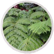 Round Beach Towel featuring the photograph Hapu'u Hawaiian Fern by Lehua Pekelo-Stearns