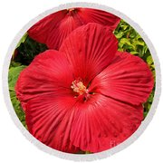 Hardy Hibiscus Round Beach Towel by Sue Smith