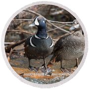 Round Beach Towel featuring the photograph Harlequin Pair by Jack Bell