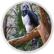 Harpy Eagle Round Beach Towel