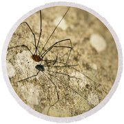 Round Beach Towel featuring the photograph Harvestman Spider by Chevy Fleet