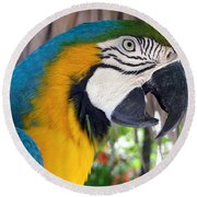 Harvey The Parrot 2 Round Beach Towel
