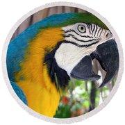 Harvey The Parrot 2 Round Beach Towel
