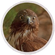 Hawk Close Encounter Round Beach Towel