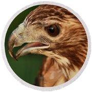 Hawk Eyes Round Beach Towel by Dan Sproul