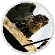 Round Beach Towel featuring the photograph Hawk On Telephone Pole by William Selander