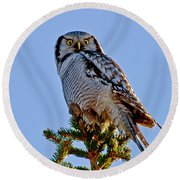 Hawk Owl Square Round Beach Towel