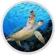 Hawksbill On Eldorado Round Beach Towel by Carey Chen