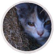 Haystack Cat Round Beach Towel by Greg Patzer