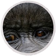 Headshot Of Mountain Gorilla Gorilla Round Beach Towel
