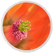 Round Beach Towel featuring the photograph Hedgehog Cactus Flower by Deb Halloran